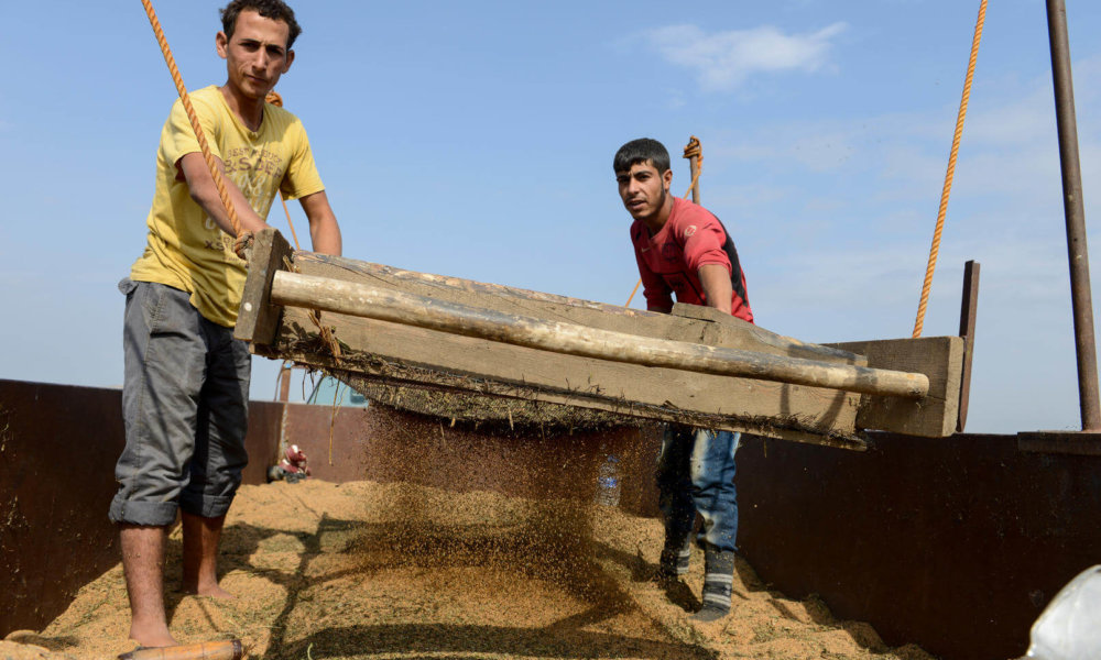 Syrian Refugees Are Often Steered Into Illegal Jobs