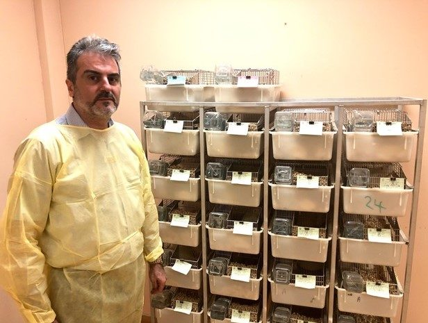 In Muscat, Rare Mice Help Scientists Understand High Blood Pressure